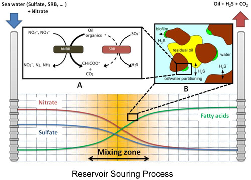 reservoir souring process